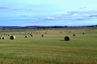 Image of haybales © www.northeastwildlife.co.uk